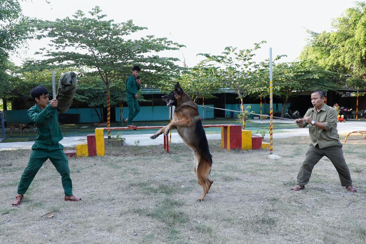 Top 5 giống chó nghiệp vụ được chọn mua nhiều nhất